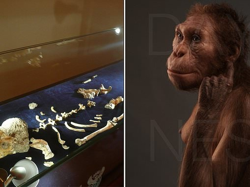 Pair of ancient skeletons represent same species of human ancestor, scientists confirm