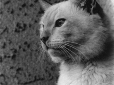 Memories of Feline Friends ~ Bozo Was the Perfect Name, Part 1