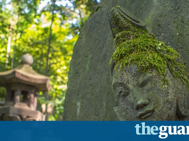 Moss may prove cheap city pollution monitor, study finds