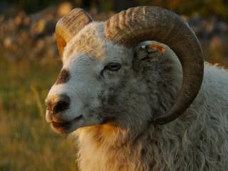 Intel's 9th-gen processors can swallow 128GB of RAM