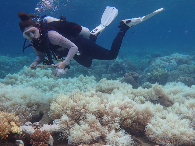 Massive Coal Mine Closer To Reality As Beloved Reef Crumbles To Climate Change
