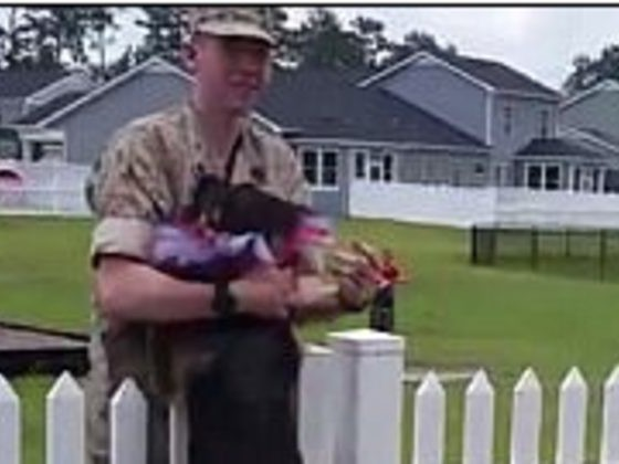 German Shepherd Adorably Freaks Out When Its Marine Dad Finally Comes Home