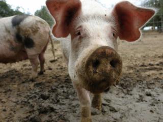 Animal welfare after Brexit: adjustable upwards or downwards