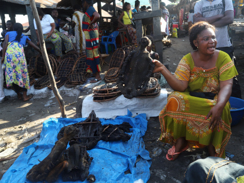 Bushmeat loses its appeal as Congo city fights Ebola