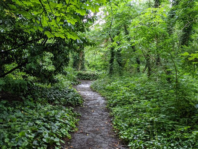 London's Pocket Parks: Barnsbury Wood, N1