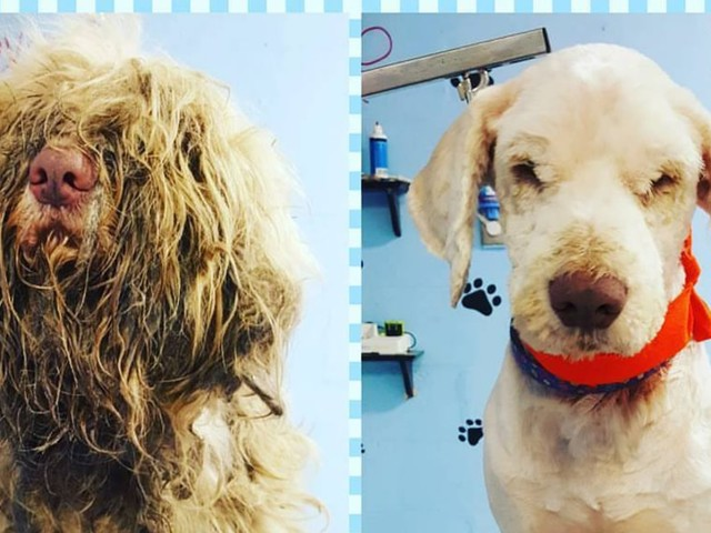 This Abandoned Dog Got an Emergency Midnight Grooming: He 'Walked Out Wagging His Tail'