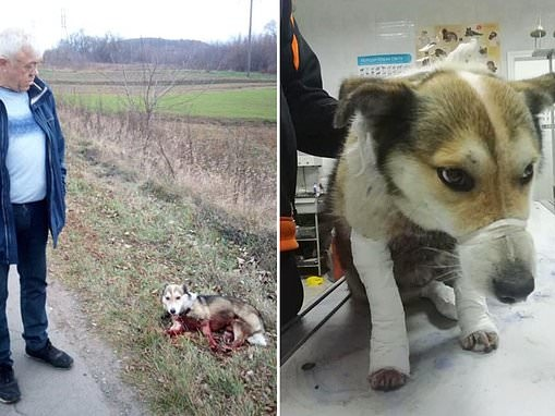 Dog is left with horrible injuries after it is tied to a car and dragged along a motorway