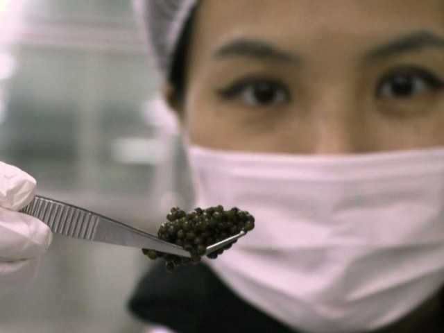 China is dominating the global caviar industry — and prices are plummeting because it's flooding the market