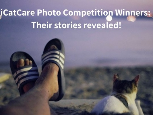 2019 'Cat-Human Relationships' photography competition winner – Philip Bloom from the UK