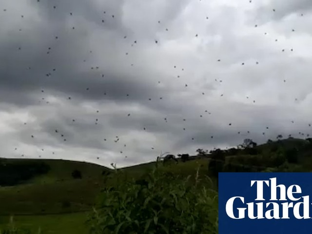 'Raining spiders': airborne arachnids appear over south-east Brazil