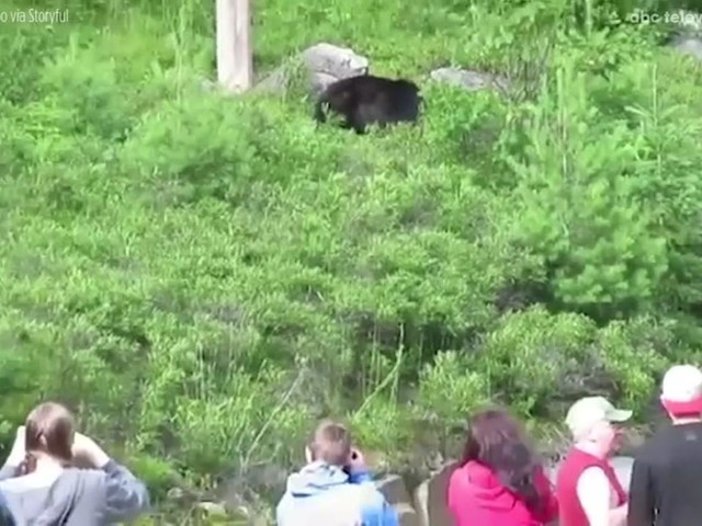 Man records fellow tourists close to black bear as an example of what not to do