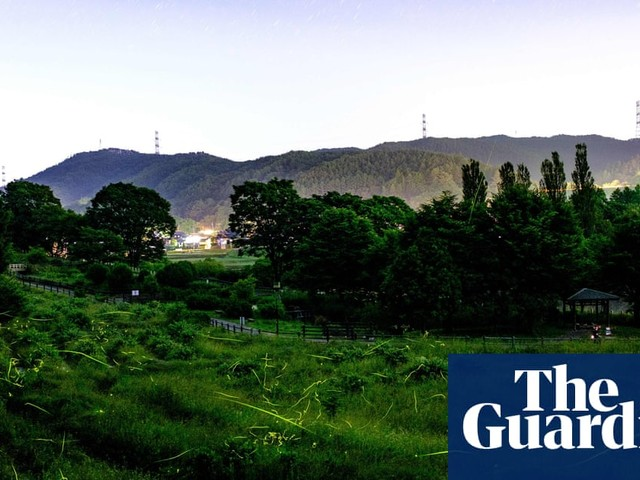 'Brief shining of the light': Japan's fireflies dance - and mate - in isolation amid Covid-19