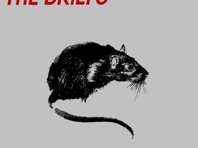 The Briefs: Platinum Rats – album review