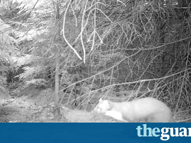 We love little critters when the real world gets too wild | Liam Williams