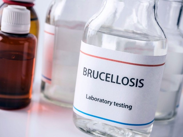 More than 3,000 people contract brucellosis after gas leak at Chinese factory
