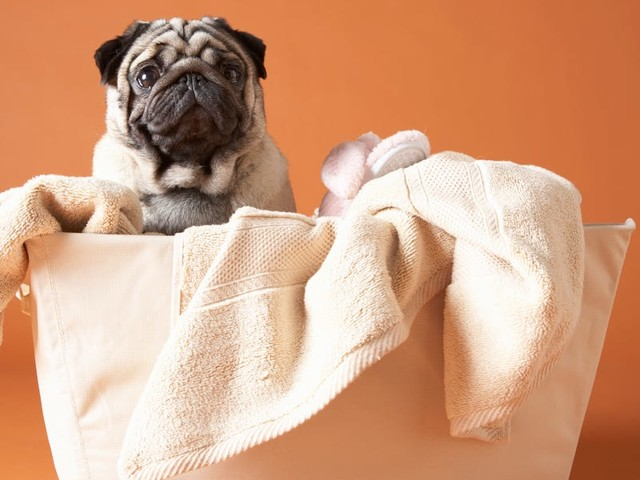 The best pet-safe cleaning products for your home