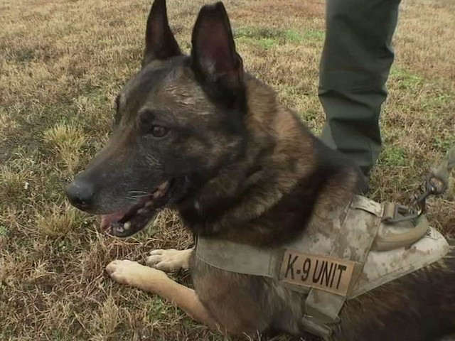 HPD K-9 officers help take down thousands of suspects
