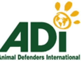 Spotlight: Animal Defenders International's Celebrity Supporters