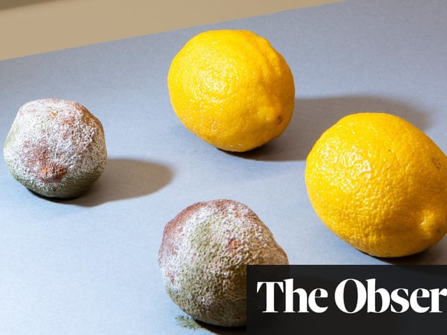 Stopping the rot: the fight to save fresh food