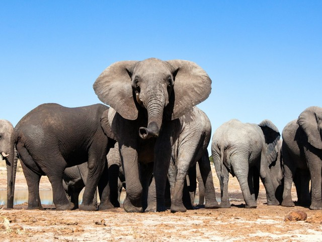 How You Can Help Stop The Ivory Trade