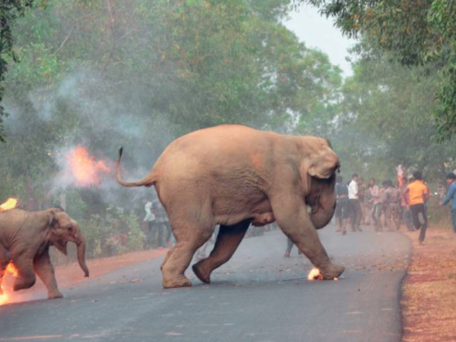 A shocking picture of a baby elephant being set on fire has won a wildlife photography competition