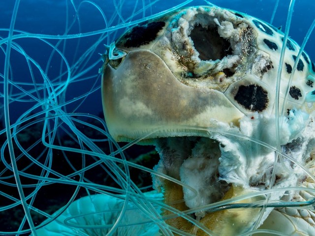 A gut-wrenching photo of a dead turtle stuck in fishing line puts the plastic problem in stark relief. The image won a prestigious award.