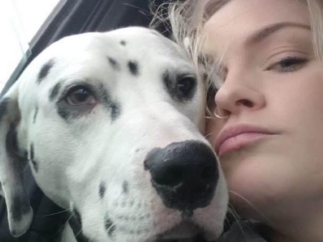 The extraordinary lengths a desperate dog owner is going to in the hunt for her missing Dalmatian