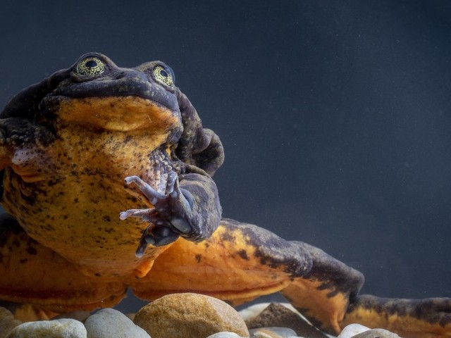 6 Cute Animals To End The Week: Lonely Frog Finds Love At Last And Puppy Performs CPR