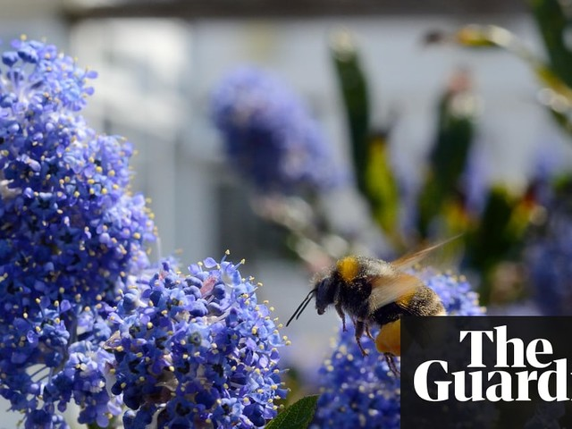 New pesticides may harm bees as much as existing ones – study