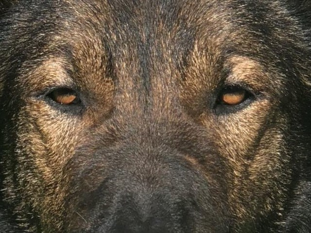 Man who threatened officer with knife gave up when he saw this police dog