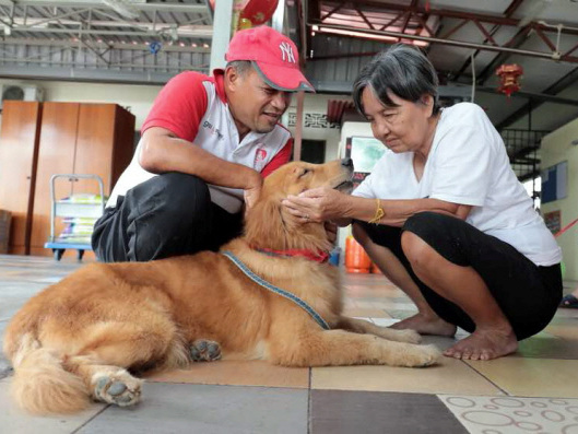 'Dog therapy' as alternative treatment