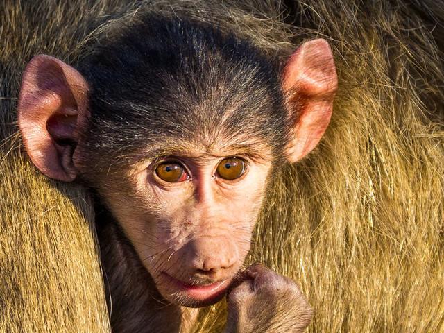 In Search of Zambia's Stunning Wildlife: A Virtual Safari