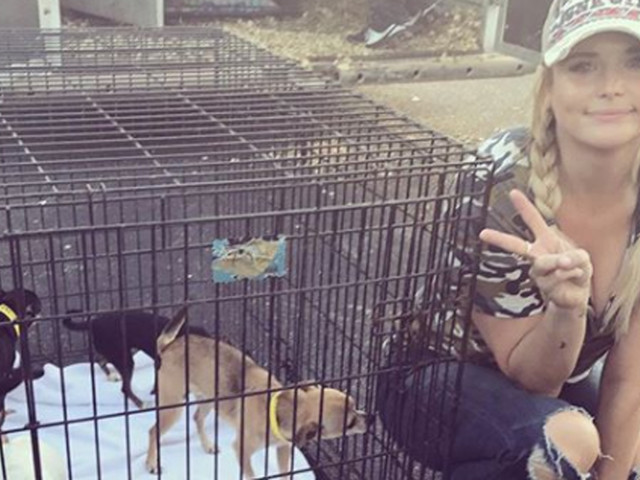 Miranda Lambert Helps Rescue Over 100 Dogs From Hurricane Harvey