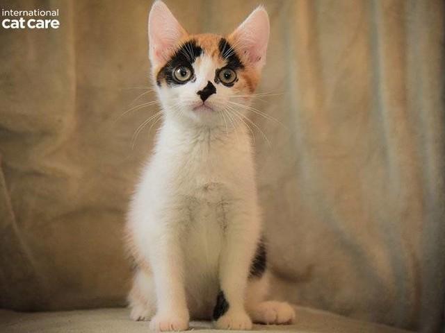 Kittenhood Photography Competition Winner – Rachel Hunter