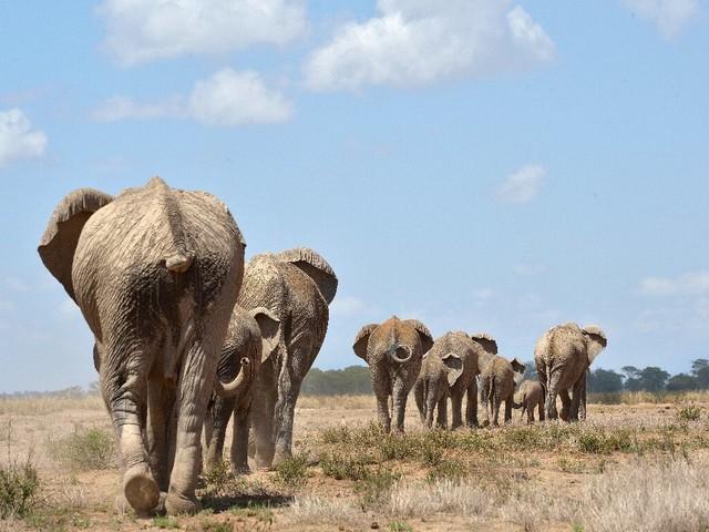Conservationists, EU MPs urge ban on trophy hunting of endangered species