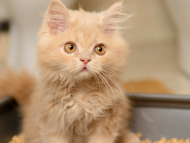 What Is Toxoplasmosis? Parasite In Litter Trays Could Help You Become A Business Fat Cat