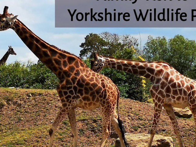 Review: Yorkshire Wildlife Park, A Fabulous Family Day Out