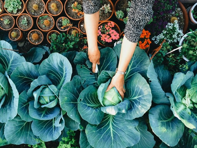 10 best 'gardenfluencers' to follow for beginners