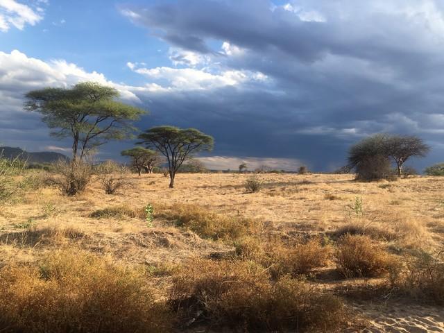 A walk on the wild side: safaris on foot in Tanzania