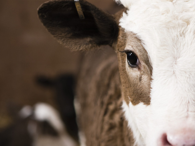 We Are Entering The Post-Milk Era: Why The ASA Ruling Shows We Are Moving Past Dairy