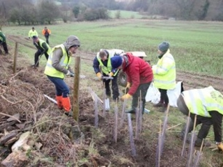 Government urged to make UK tree planting target legally-binding