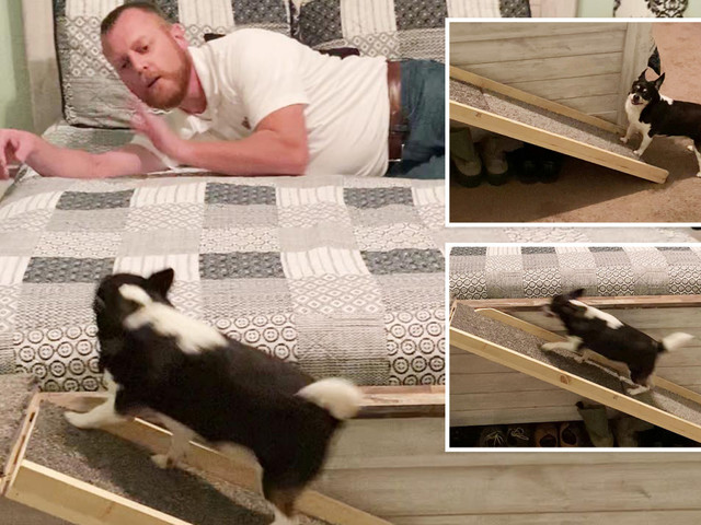 Caring boyfriend builds ramp for girlfriend's tiny dog to join them in bed