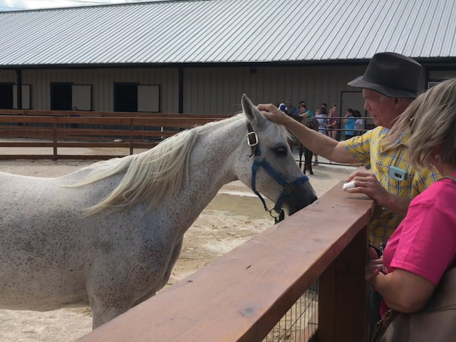Once neglected and abused horses ready for adoption at new Houston SPCA Equine Center and Barn