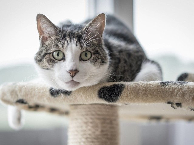 Vet Warns of Dangers of Flea Infestations After Suffering Temporary Vision Disturbance After Contracting Bartonella Through a Cat Scratch