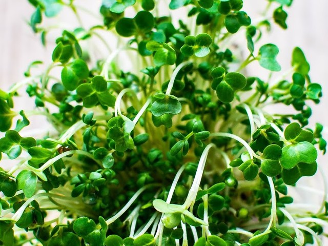 What are Microgreens ?
