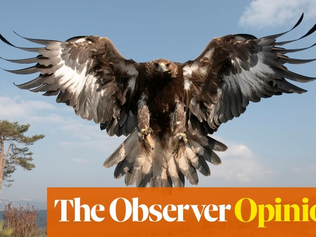 Scotland's golden eagles are dying in agony, all in the name of sport | Kevin McKenna