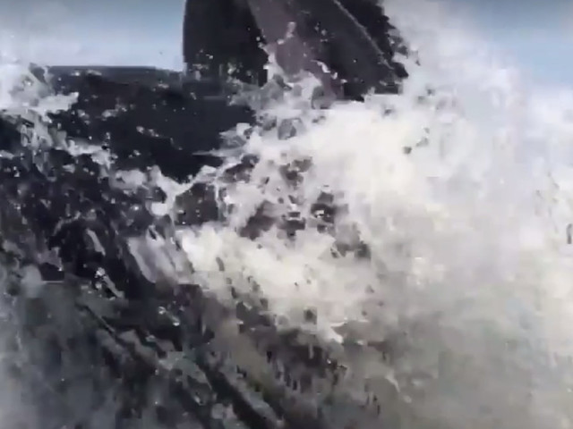 Holy S**t!' Leaping Whale Nearly Capsizes Jersey Fishing Boat