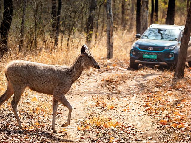 Green 2 Green Drive: Tata Nexon EV on safari in Satpura