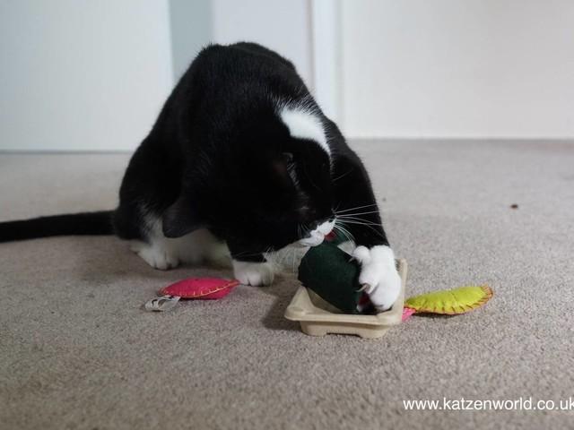 Oliver & Nubai: Arrival of the FreakMeow catnip toys PART 2