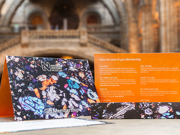 Give the gift of a London Museum membership this Christmas